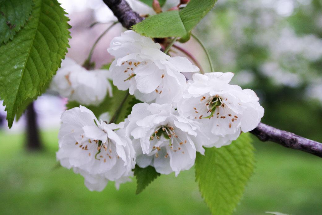 white flowers modeblog deutschland