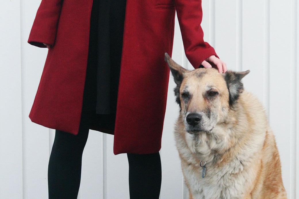 zara roter Mantel hund wolf wolfshund