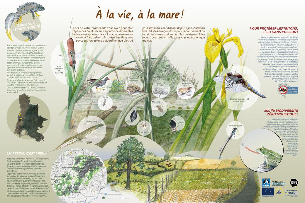 Illustration et conception graphique du panneau comprenant la réalisation d'illustration naturalistes et de paysage. Dessins réalisés au crayon de couleur et à l'aquarelle.