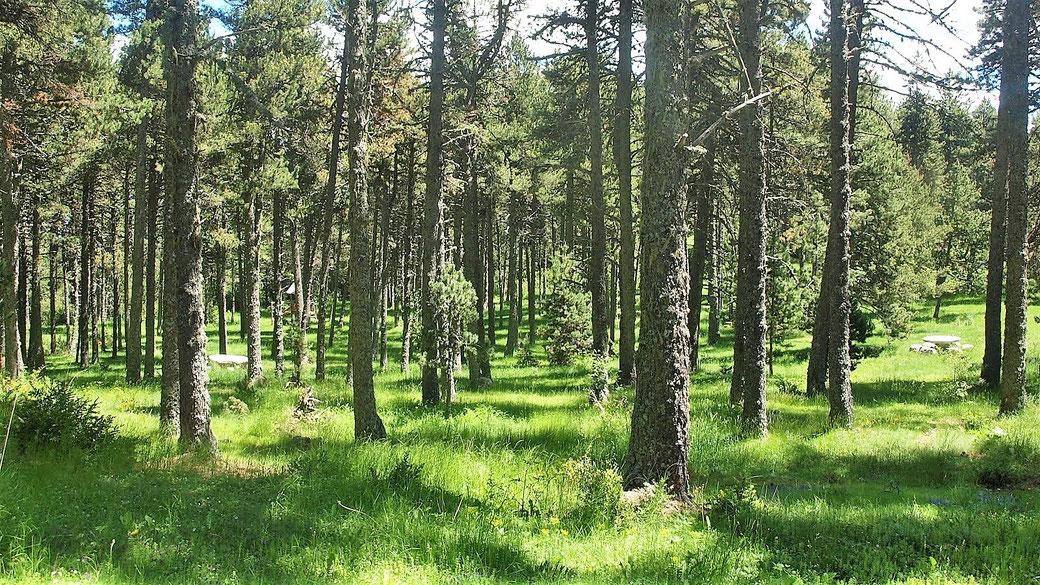 Senderisme - Excursió a peu a la Baixa Cerdanya - Pla d'Escobeiró