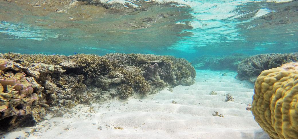 宮古島の透明度の高い海