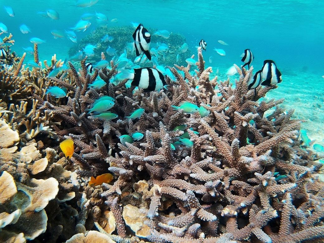 宮古島の熱帯魚たち