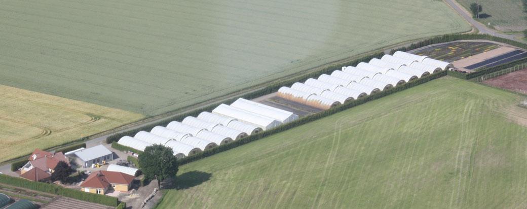 Luftfoto Betrieb Husmann Heide-Jungpflanzen in Borstel, Niedersachsen