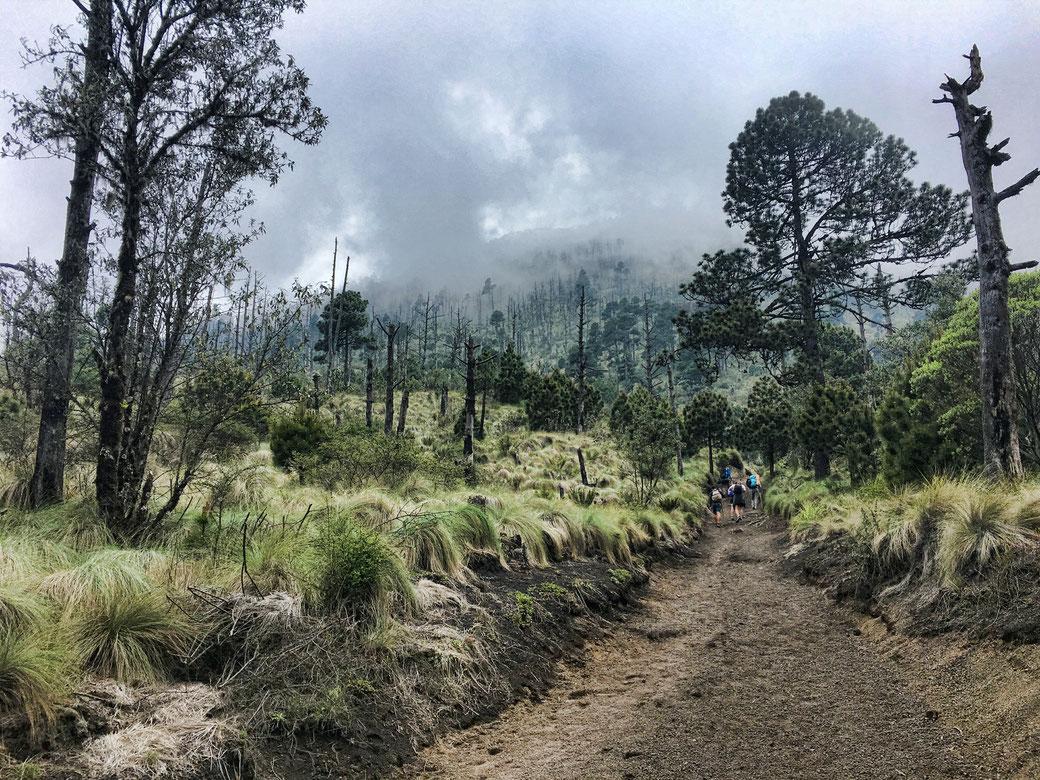 atemberaubende Natur auf einem Vulkan