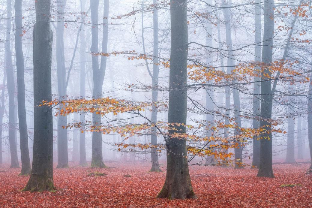 Mistige Herfstochtend Boswachterij Gieten © Jurjen Veerman