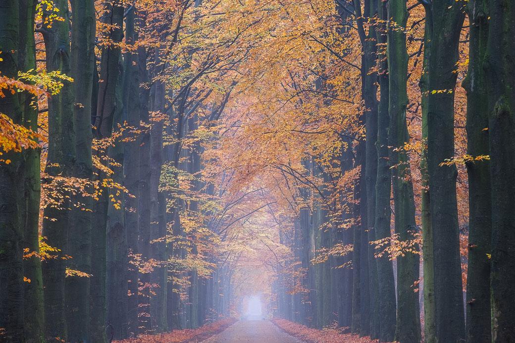 Herftslaan boswachterij Gieten © Jurjen Veerman