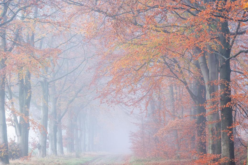 Herfstochtend boswachterij Gieten © Jurjen Veerman