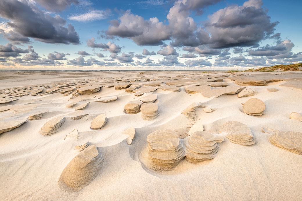 Beach mushrooms strand Oosterend, Terschelling
