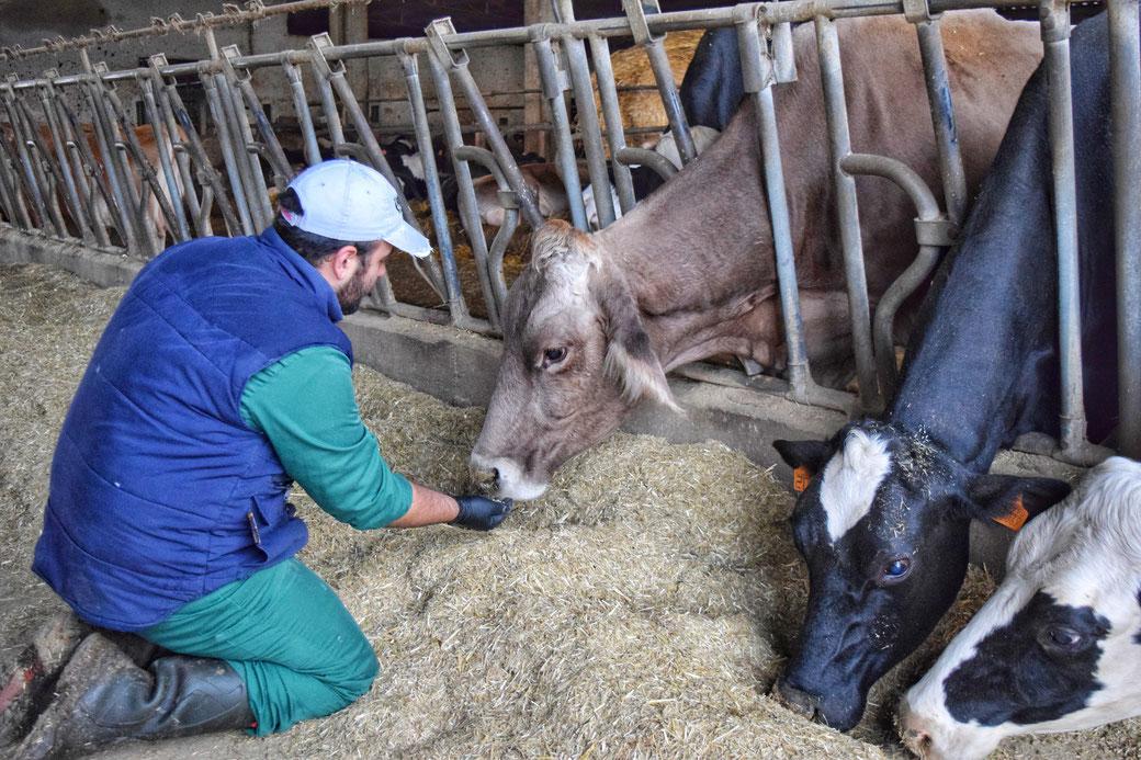 Produzione propria di latte per la creazione di prodotti caseari 100% italiani shop on line fattoria granolat