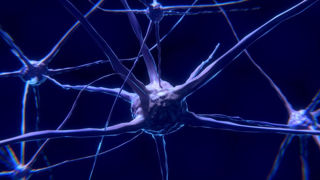 Funktion des autonomen vegetativen Nervensystems für sympathische und parasympathische Regulation, vagusnerv für Erholung und Entspannung