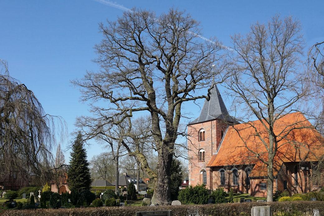Eiche auf dem Friedhof St. Georg in Genin