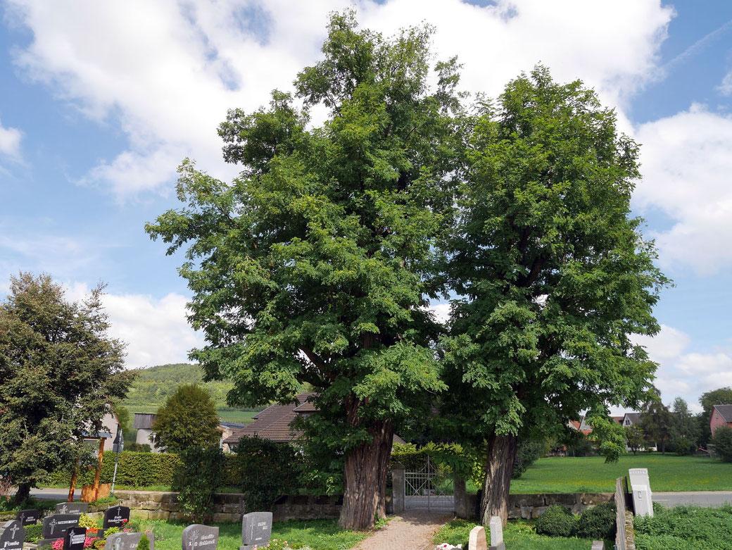 Robinie auf dem Friedhof bei Igensdorf