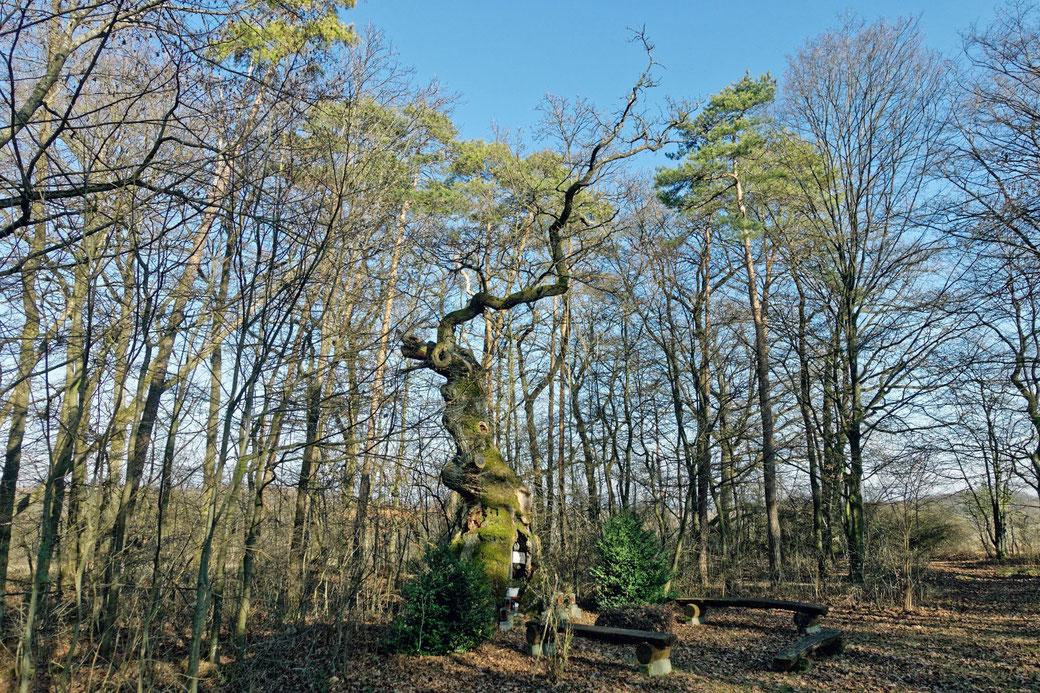 Heiliger Baum bei Eberstal