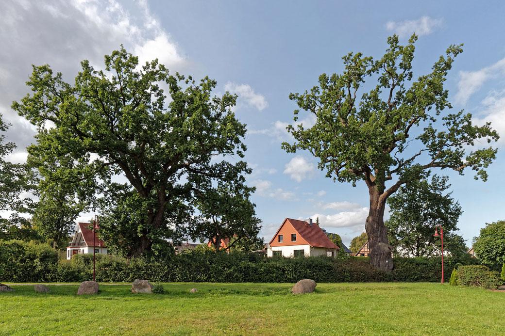 Raben Steinfelder Eichen, RS 3 (links) und RS 4 (rechts)