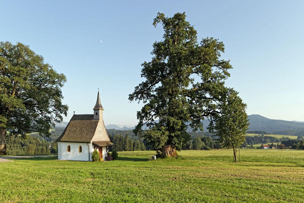 Kapelleneiche bei Abstreit