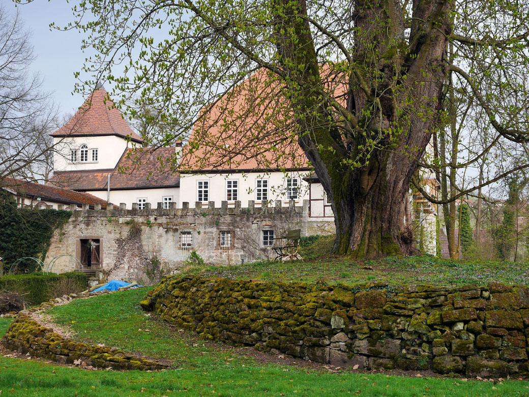 Schlosskastanie in Weiler