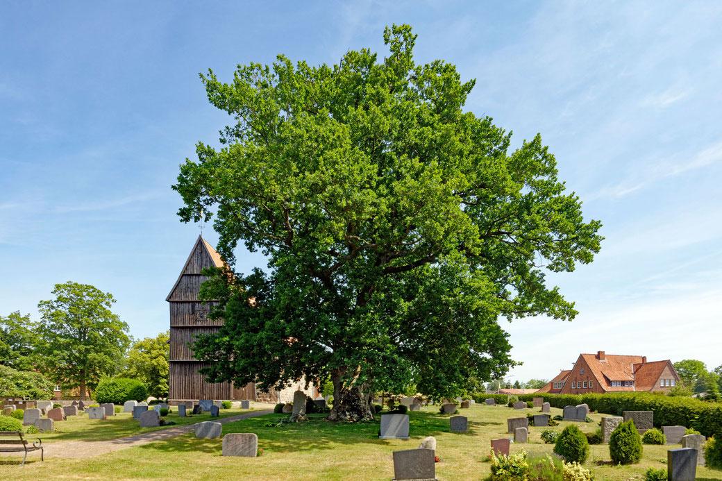 Eiche auf einem Friedhof in Sterley