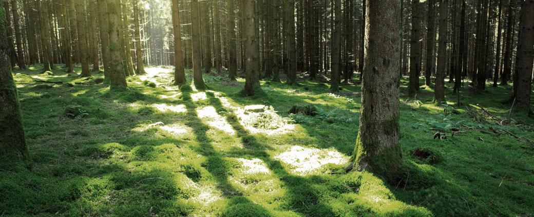 Holz Holzbau Laireiter