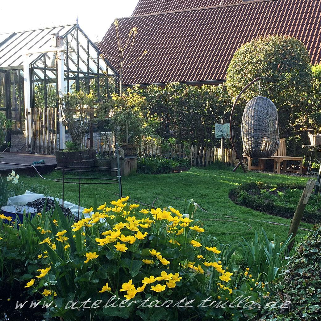 Sumpfdotterblume im Garten