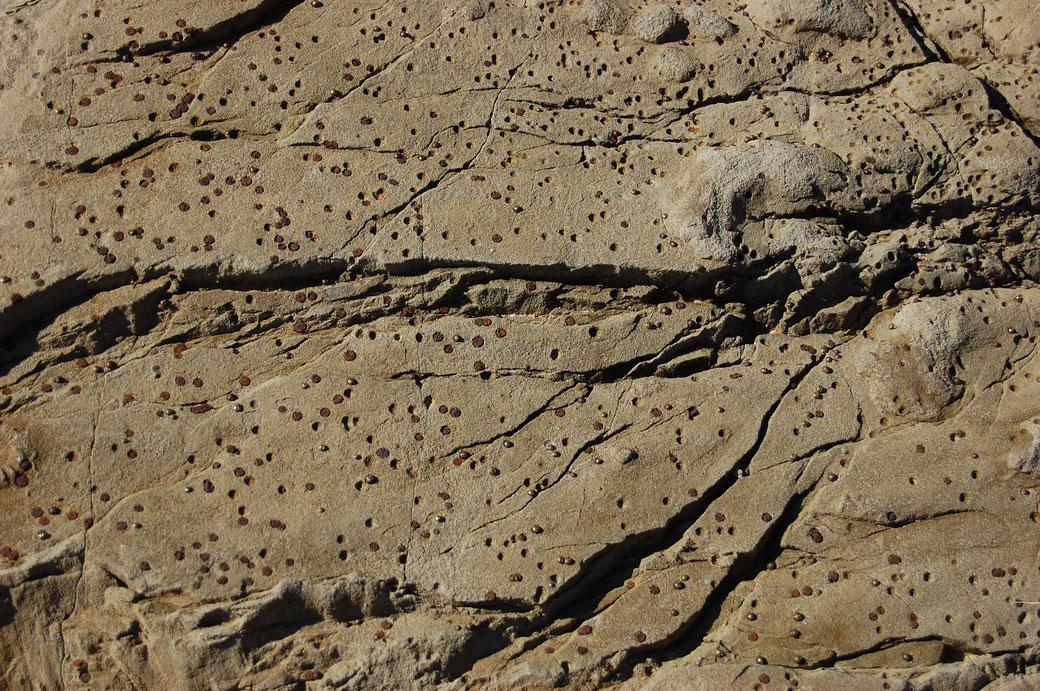 Hier seht ihr ein Phänomen für das ich echt keine Erklärung habe... und das will was heißen! Afrikanisierte Marienkäfer machen kreisrunde Fladen, die sich dann Alienmäßig in den Stein fressen und Löcher hinterlassen. Saukopf Natur sag ich da nur...