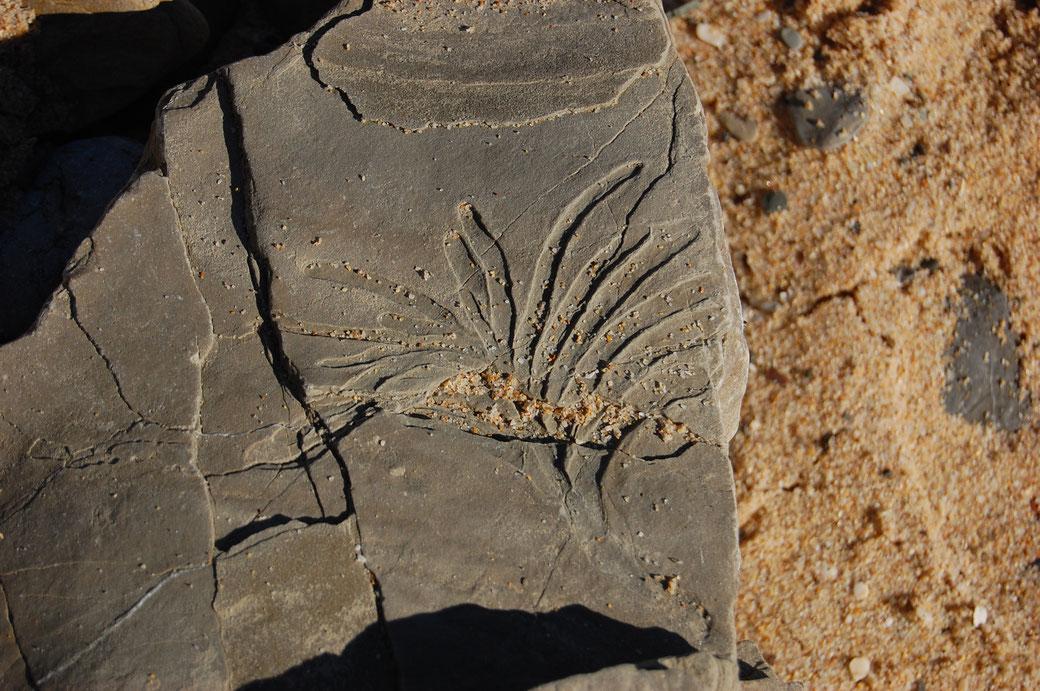 Dass auch der Neandertaler gern mal einen gekifft hat beweist dieses dieses Hanfblatt zum trocknen auf einen Stein gelegt und wie zu erwarten vergessen. Über Trillionen von Jahren isses dann versteinert und erst in den 60ern von den Hippies wiederentdeckt