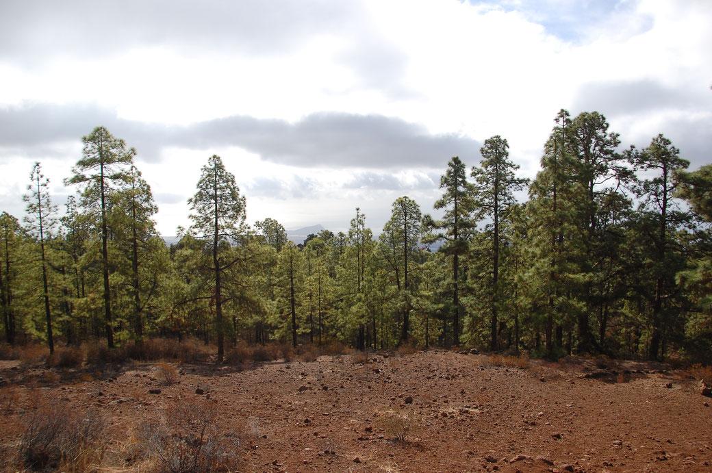Der Blick von meinem Picknikplatz, im Hintergrund nur schwach zu sehn, der Montana Roja.