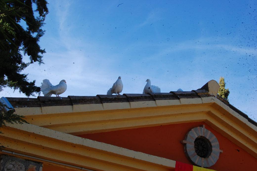 """El Gordo meint:"""" Lieber ne Taube aufem Dach, als ne blinde im Bett""""...versteh ich nich..."""