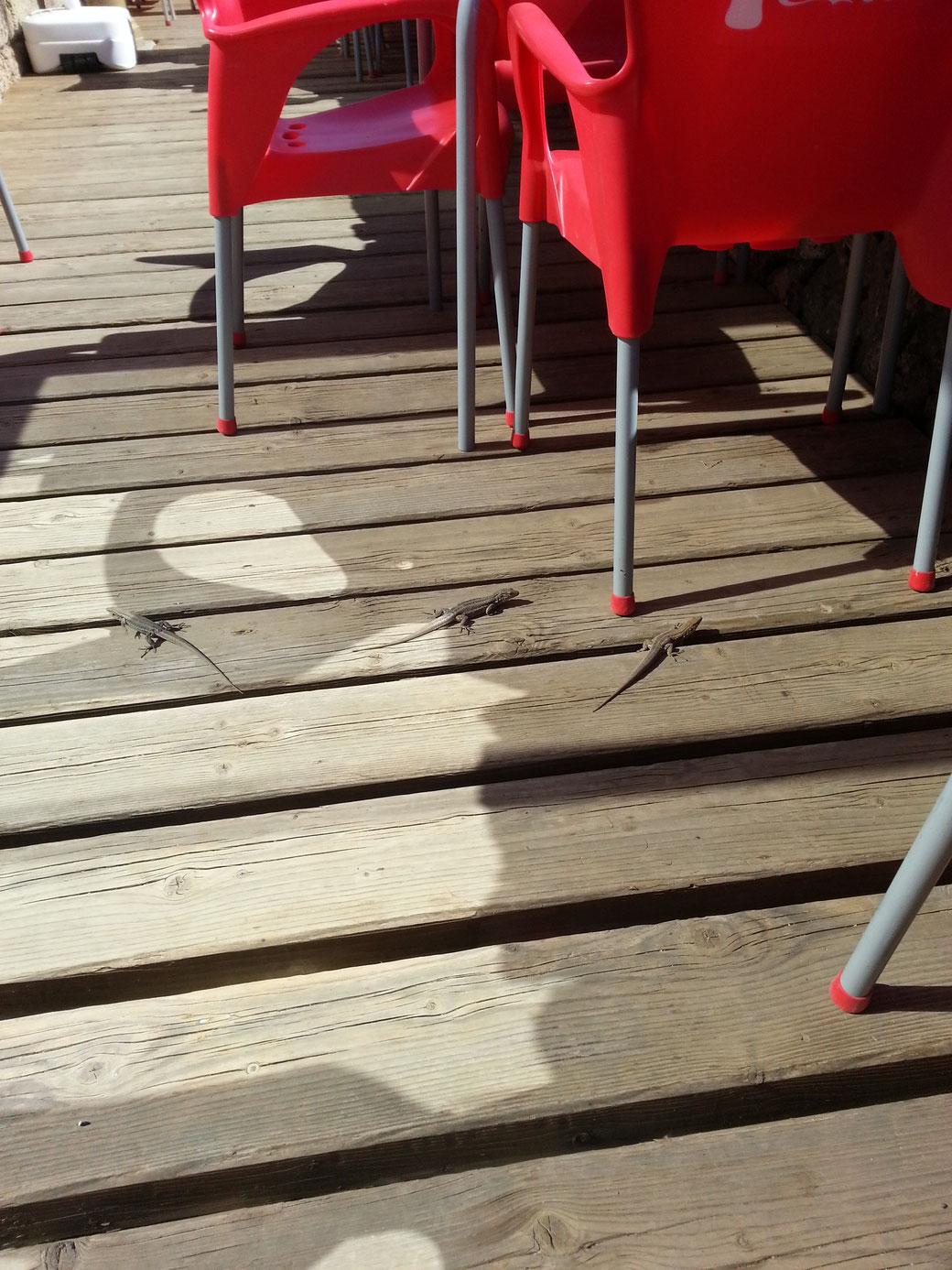 Die Geckos hier erinnern mich an die Vögel, die immer auftauchen, wenn man was isst. Die hausen unterhalb des Boardwalks.