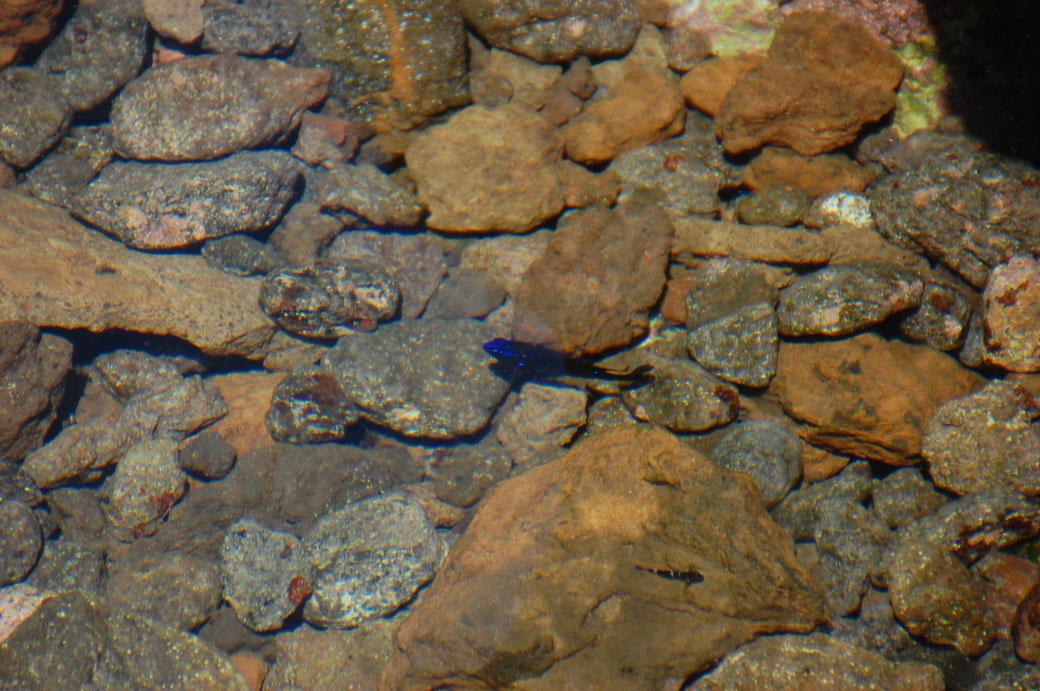Diese kleinen leuchtenden Meeresbewohner faszinieren mich immer wieder aufs neue, vor allem im Schwarm