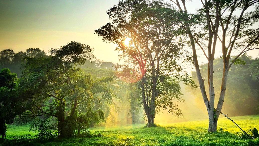 Sonnenlicht, Nebel