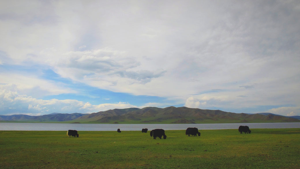 bigousteppes mongolie troupeau lac blanc