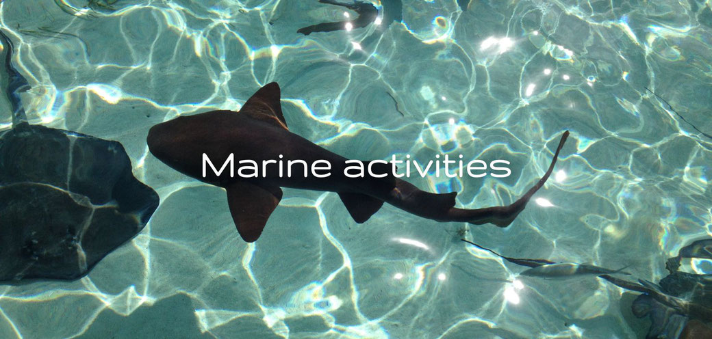 A lot of marine activities