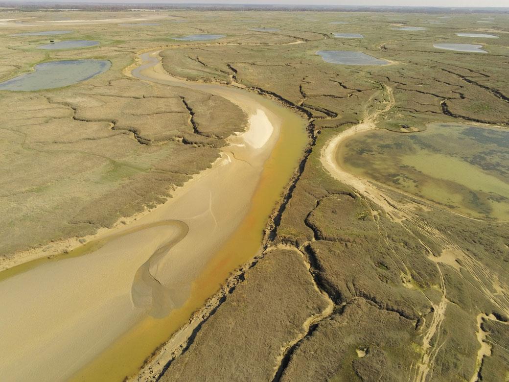Sortie nature en baie de Somme