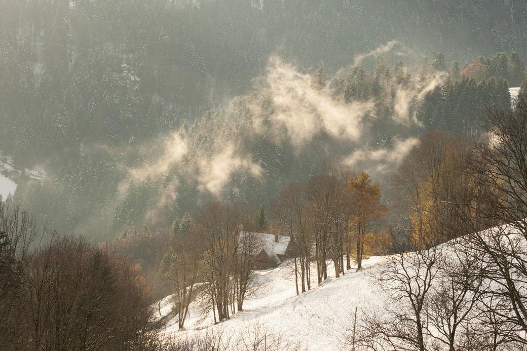 Schnee-Landschaft bei St. Peter im Schwarzwald. Nebel-Schwaden über einem Tannen-Wald. Ein Haus. Sonnenlicht auf verschneiter Wiese und auf dem golden leuchtenden Nebel.