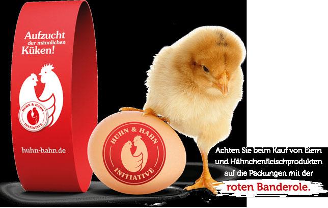 Mit Huhn und Hahn gegen das Töten der männlichen Küken