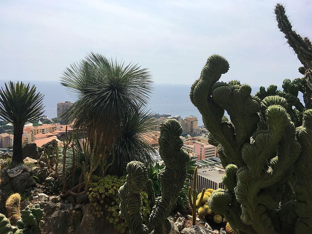 Jardin Botanique, Monaco