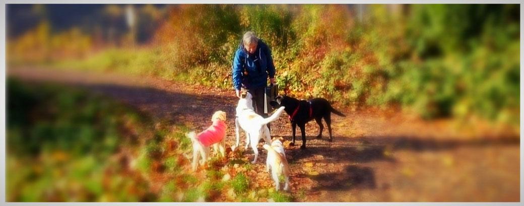 Hundeschule & Hundetrainer Bonn