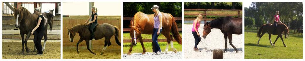 Nicole Friedrich - Freiarbeit - Natural Horsemanship - Bodenarbeit - Reiten