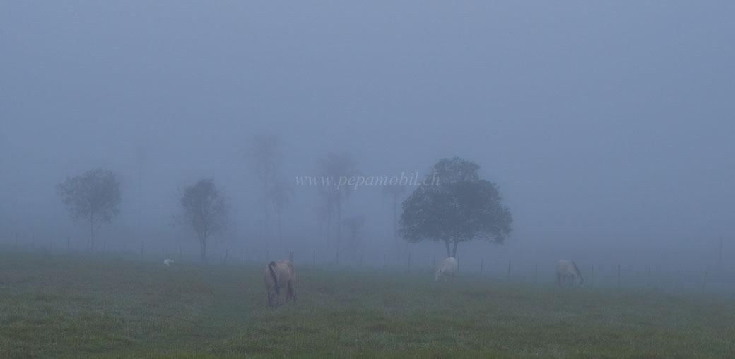Pferdehaltung in Paraguay