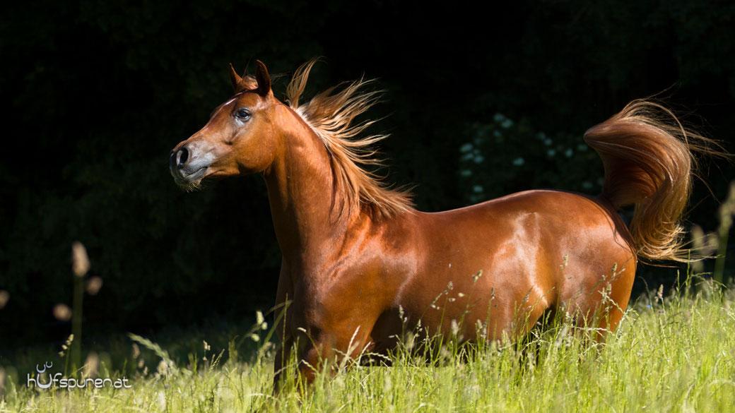 Pferdefotoshooting Hufspuren Hanna Stemke