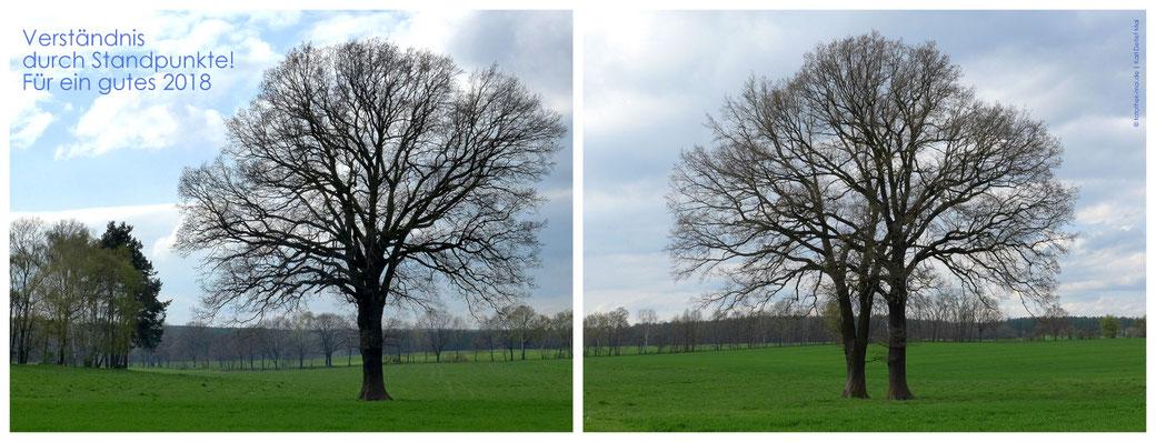 Zwei Bäume aus unterschiedlicher Sicht. Einmal sieht es aus, als wäre es ein Baum