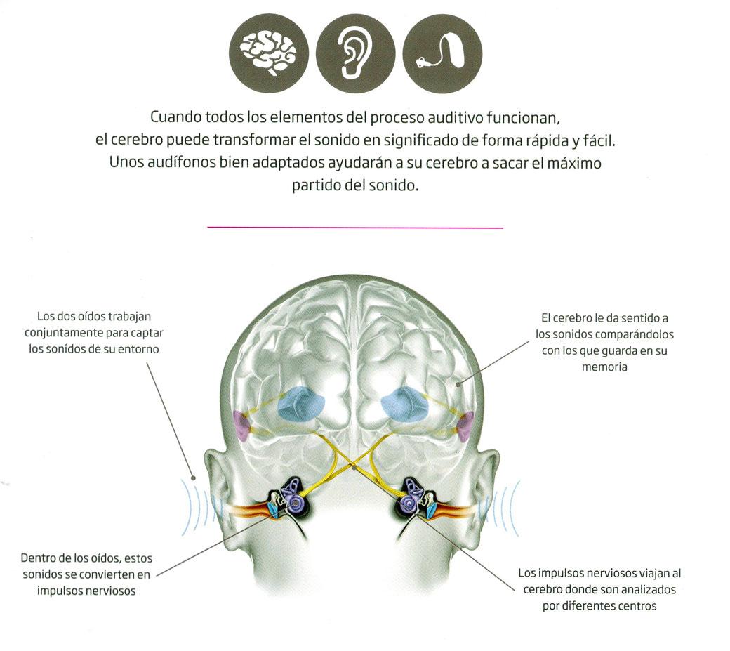 Unos audífonos bien adaptados ayudarán a su cerebro a sacar el máximo partido del sonido. Para conseguirlo cuenta con la profesionalidad de los audíólogos del Centro Auditivo Cuenca.