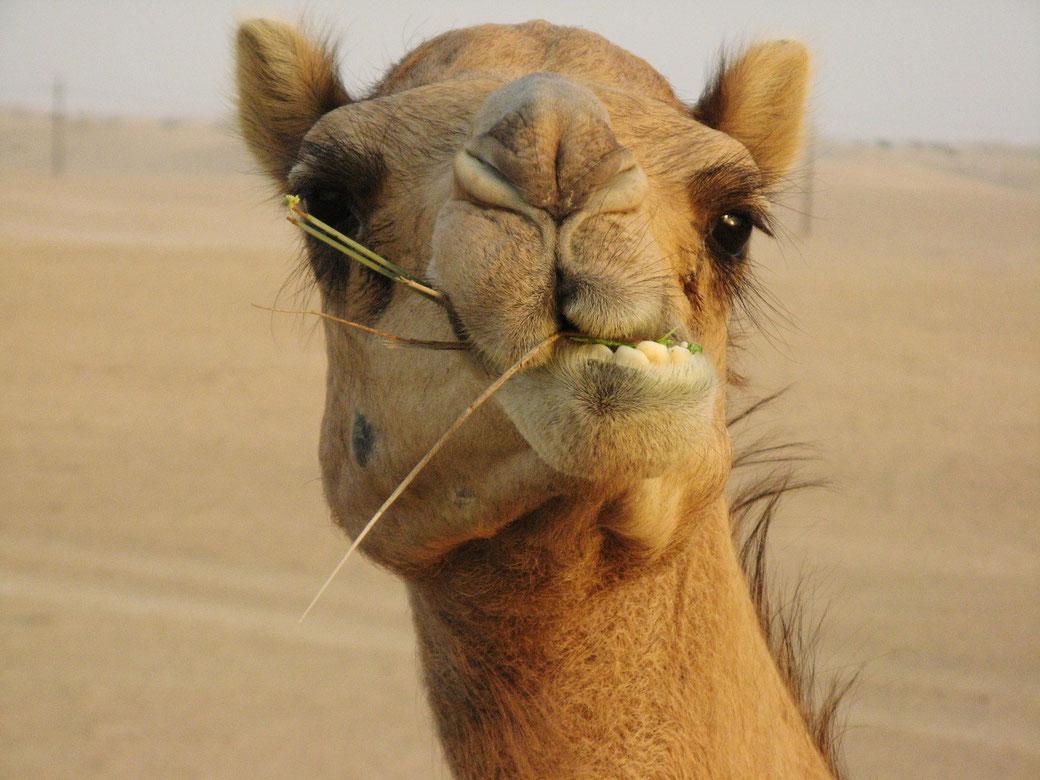Kamel VAE grenzenlosunterwegs