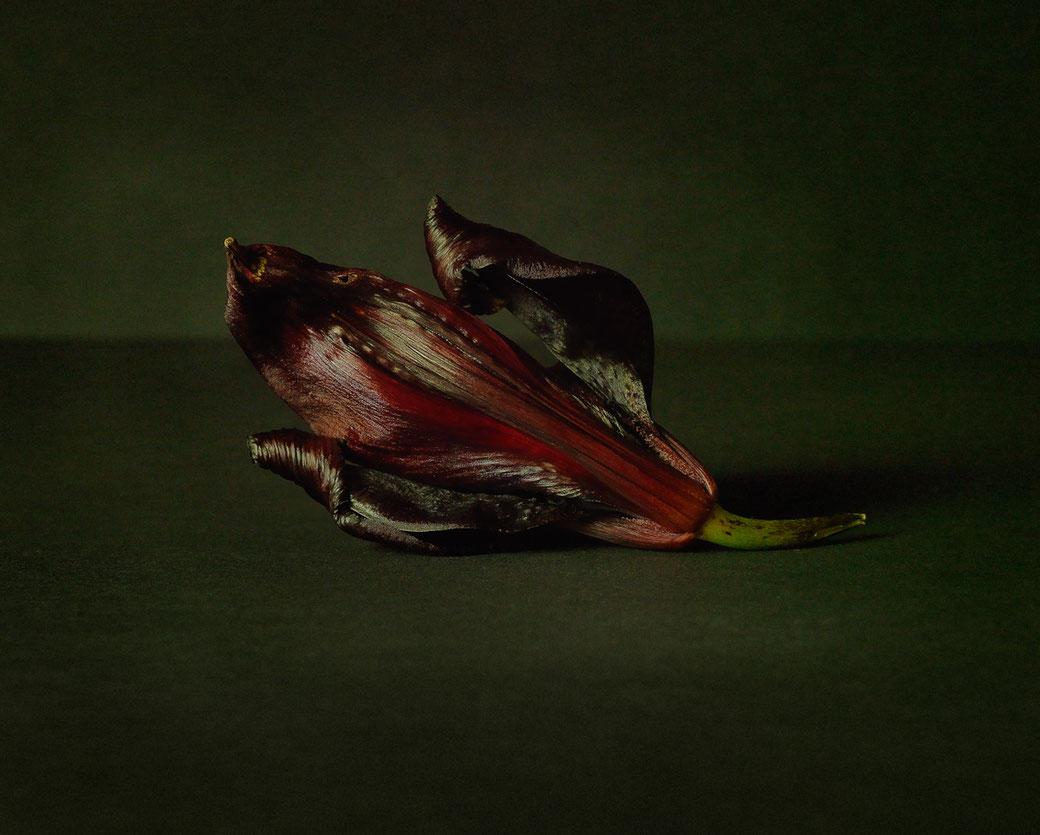 Bild Liliaceae, 2016, Ultrachrome K3 Pigmentdruck, Auflage 10 + 2 E.A., Marc Junghans Fotografie