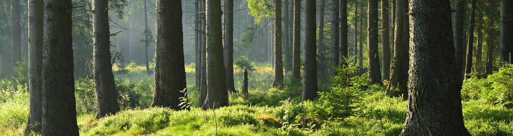 Wald pachten, Waldholz Immobilien