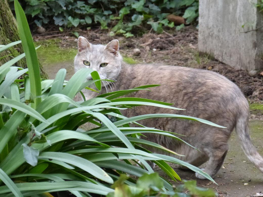 Zwischen den aufwendigen Grabmälern des Campo Cestio stromern wilde Katzen herum oder halten in der Sonne ein Schläfchen.