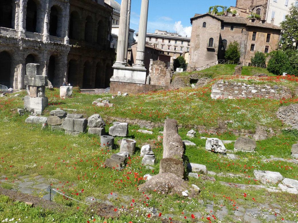 Der Frühling in Rom - Schöner gehts kaum: Die Blumenwiese am Marcellus Theater