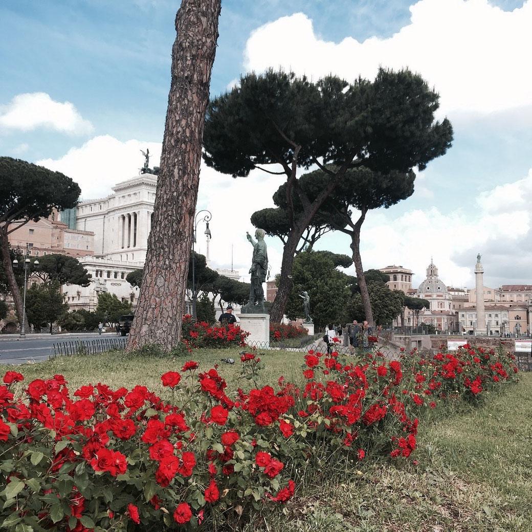 Rom im Mai - Rosige Aussichten auf der Via dei Fori Imperiali