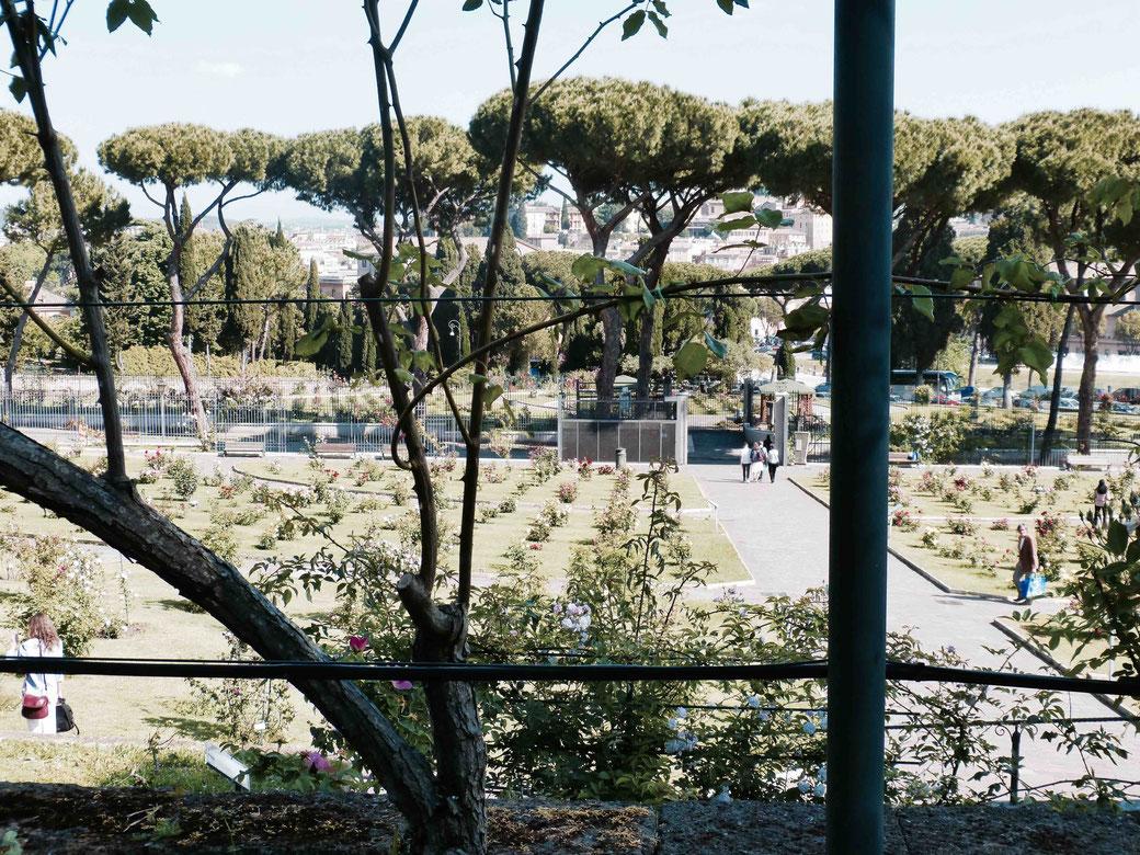 Der Rosengarten in Rom ist keine atemberaubende Botanik-Schönheit. Beim Anblick der Kulisse bleibt mir jedoch die Spucke weg.