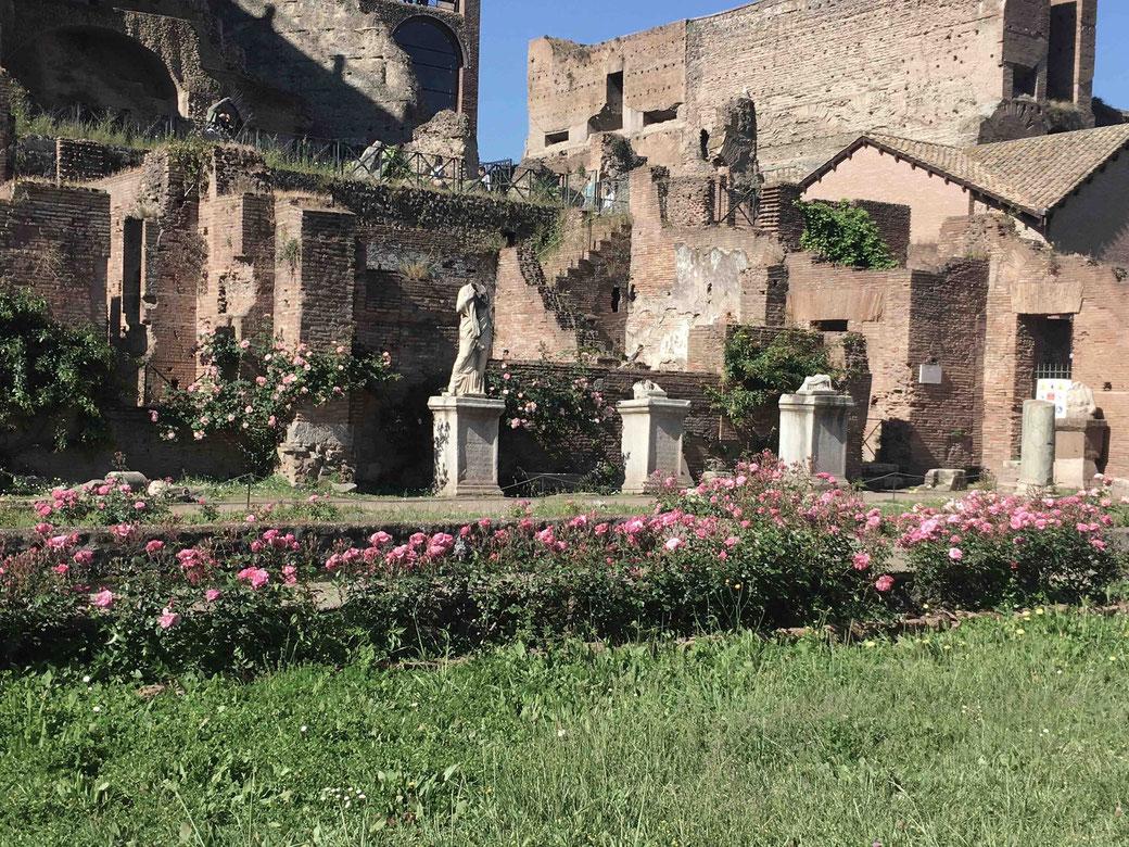 Frühling in Rom - Auch das Forum Romanum blüht auf